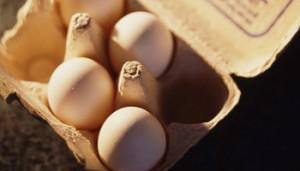 eggs_lg